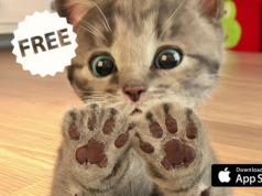 Download Gratis Little Kitten My Favorite Cat Minggu Ini